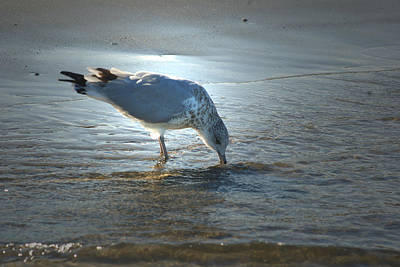 Photograph - Sea Gull At Sundown by Margie Avellino