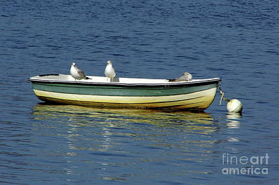 Photograph - Sea Gull Boat  by D Hackett