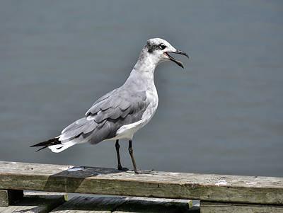 Photograph - Sea Gull Call by Robert Brown
