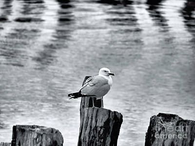 Fore River Photograph - Sea Gull Black And White by Elizabeth Dow
