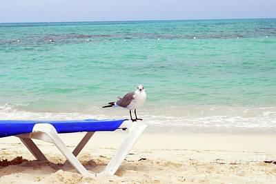 Photograph - Sea Gull by Gary Wonning