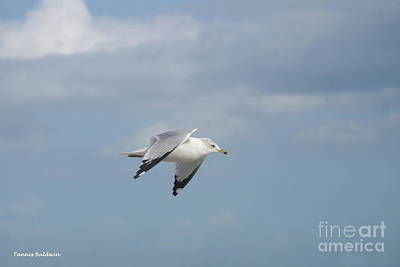Photograph - Sea Gull In Flight by Tannis Baldwin