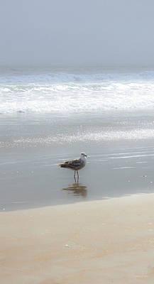 Stinson Beach California Photograph - Sea Gull by Kathleen Horner