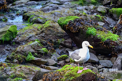 Washington State Photograph - Sea Gull Larry by James E Weaver
