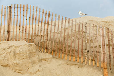 Photograph - Sea Gull On Dune by Kathleen McGinley
