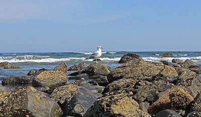 Photograph - Sea Gull On Long Sands Beach York Maine by Michael Saunders