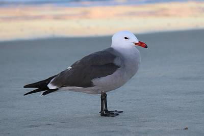 Photograph - Sea Gull On The Beach - 2 by Christy Pooschke