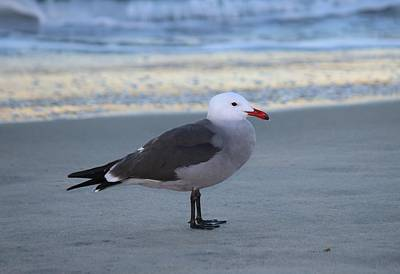 Photograph - Sea Gull On The Beach  by Christy Pooschke