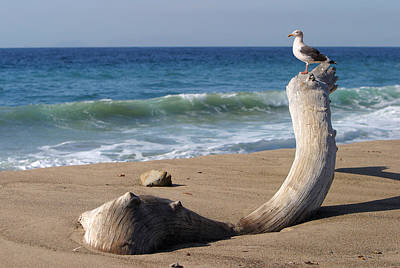 Sea Gull Perched On Dead Tree Original by Linda Phelps