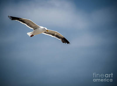 From The Kitchen - Sea Gull by Rich Governali