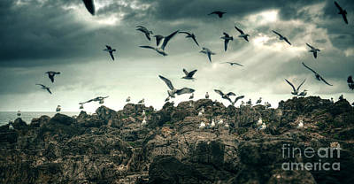 Soaring Photograph - Sea Gulls by Carlos Caetano