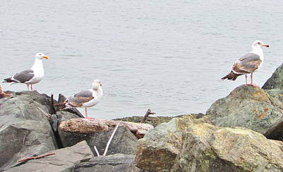 Photograph - Sea Gulls by Marilyn Diaz