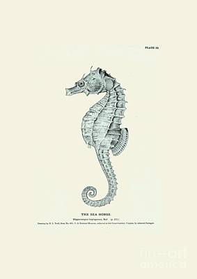 Sea Horse  Print by Patruschka Hetterschij