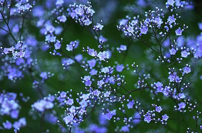 Photograph - Sea Lavender by Debbie Oppermann