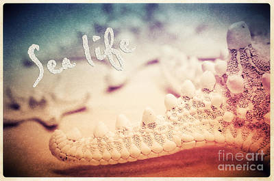 Sea Life Art Print by Angela Doelling AD DESIGN Photo and PhotoArt