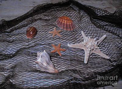 Photograph - Sea Life In Net by Scott Hervieux