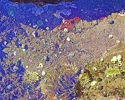 Photograph - Sea Life On A Rock In Salt Creek Recreation Area On Olympic Peninsula, Washington by Ruth Hager