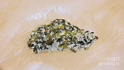 Photograph - Sea Life On Rock by Lexa Harpell