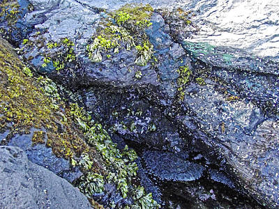 Photograph - Sea Life On The Rocks In Salt Creek Recreation Area On Olympic Peninsula, Washington by Ruth Hager