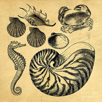 Print featuring the drawing Sea Life Vintage Illustrations by Edward Fielding