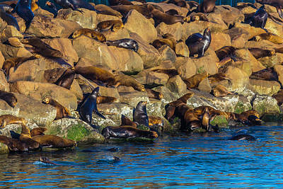 California Sea Lions Photograph - Sea Lion Coloney by Garry Gay