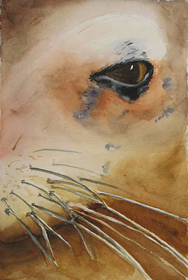 Painting - Sea Lion Eye by Libby  Cagle
