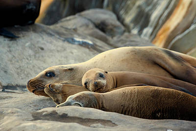 Art Print featuring the photograph Sea Lion Family by Mike Trueblood