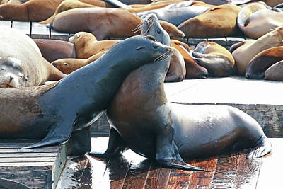 Photograph - Sea Lion Fun by Shoal Hollingsworth
