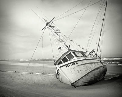 Photograph - Sea Lion II - On The Beach by HW Kateley