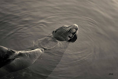 Photograph - Sea Lion II Toned by David Gordon