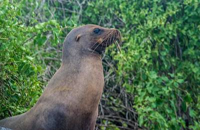 Photograph - Sea Lion Looking To The Right by Harry Strharsky