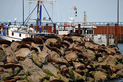 Photograph - Sea Lion Nap Time by Tom Cochran