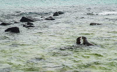 Photograph - Sea Lion Off-shore Play by Harry Strharsky