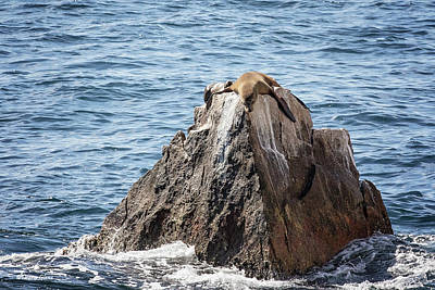 Photograph - Sea Lion Rock by Deana Glenz