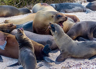 Photograph - Sea Lion Siesta Arousal by Harry Strharsky
