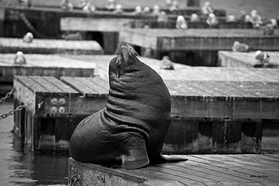 Photograph - Sea Lion Vi Bw by David Gordon