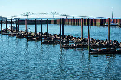Photograph - Sea Lions And Astoria-megler by Tom Cochran