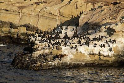 Photograph - Sea Lions And Seals  by Hany J