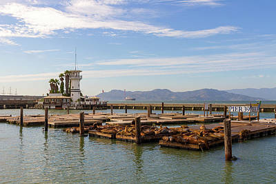 Sea Lions At Pier 39 In San Francisco Art Print