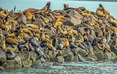 Photograph - Sea Lions by Charlene Bucklin