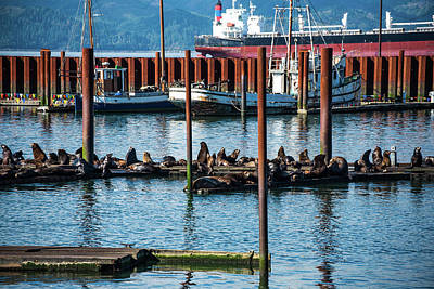 Photograph - Sea Lions, Fishing Boats, Cargo Ship by Tom Cochran