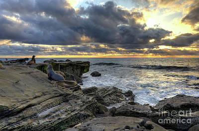 Art Print featuring the photograph Sea Lions At Sunset by Eddie Yerkish