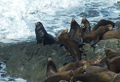 Photograph - Sea Lions by Lawrence Pratt