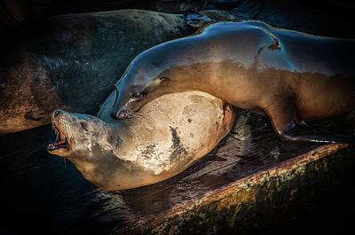 Photograph - Sea Lions by Ralph Vazquez
