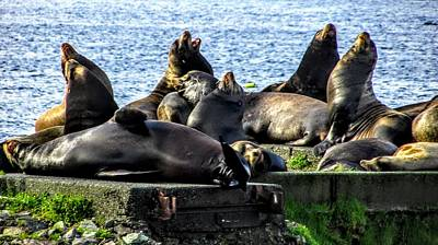 Photograph - Sea Lions Singing by Marilyn Diaz