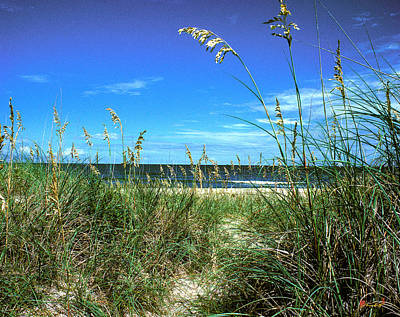 Photograph - Sea Oat Dunes 11d by Gerry Gantt