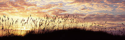 Amelia Island Photograph - Sea Oat Grass On The Beach, Atlantic by Panoramic Images