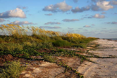 Photograph - Sea Oats Along The Beach by Barbara Bowen