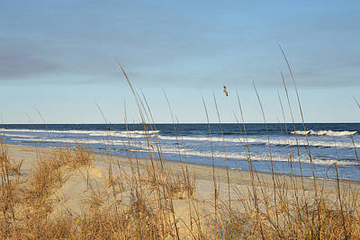 Photograph - Sea Oats And Gull by Alan Lenk
