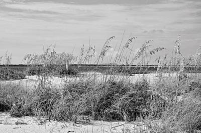 Photograph - Sea Oats And Sand Dunes by Carol Bradley